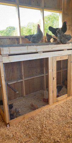 Cute Chicken Coops, Chicken Coop Run, Chicken Pen, Chicken Feeders, Chicken Garden, Chicken Coop Designs, Backyard Chicken Coops, Backyard Farming, Chickens Backyard