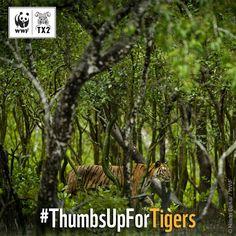 WWF France (@WWFFrance)   Twitter