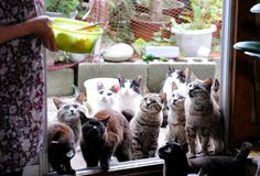 Forget cat cafes and house pets, if you're a real feline fan there's only one place you need to be: cat heaven island.  Tashirojima, a fishing town jus...