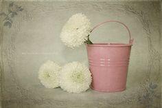 Para mi pequeño Tass... by Mariló Irimia, via Flickr