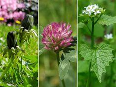 Így bánj el a gyomokkal: edd meg őket! Edd, Plants, Gardens, Flora, Garden, Plant, Garden Types, Tuin, Planting