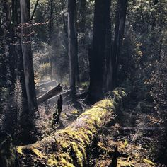 Wondering what the Natural Flames in New Zealand look like? You might find them during a bush-walk at Murchison.