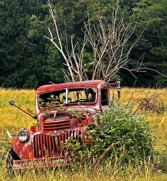old truck in the middle of a field ~ still lovely after all these years