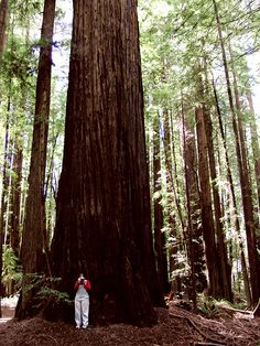 Redwood Forest near Crescent City California is absolutely awesome