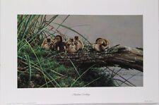 Alan M. Bird Paintings, Photorealism, Wildlife Art, Bird Prints, Bird Art, Natural World, Paintings Of Birds, Bird Pictures