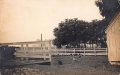 Real Photo Postcard Animals on a Ranch in/near Mount Eden, California~108270