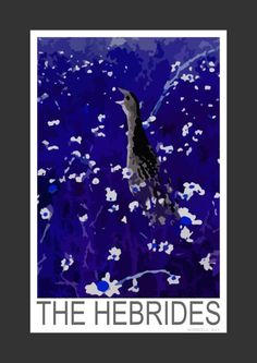 Corncrake at night in the Outer Hebrides (Art Print)