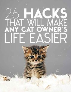 26 Hacks That Will Make Any Cat Owner's Life Easier. Don't have a cat. But if I ever get one... These are awesome!