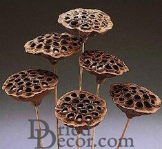 Ideas to use Dried Seed Pods for your Decorations. Great for home or office decorations.