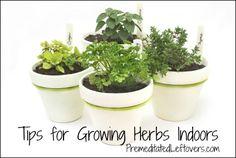 Tips for growing an indoor herb garden:)