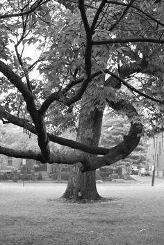Schiller Park, German Village, Columbus, Ohio. Photo by Jessica Baldwin.