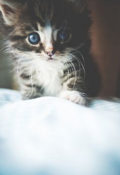 I want this kitten soooooo bad!!!