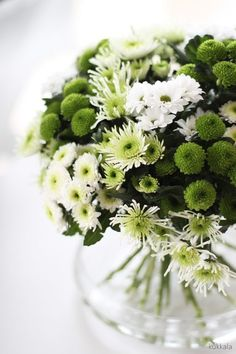 Vianočný kaktus: Ako ho pestovať, starať sa a polievať Pansies, Daffodils, Tulips, Crysanthemum, Photo Bouquet, Flowering Trees, Lily Of The Valley, Water Lilies, Carnations