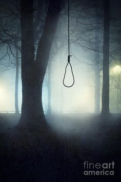 Noose From Tree | Hangmans Photograph - Hangmans Noose Hanging From A Tree In Fog by Lee ...