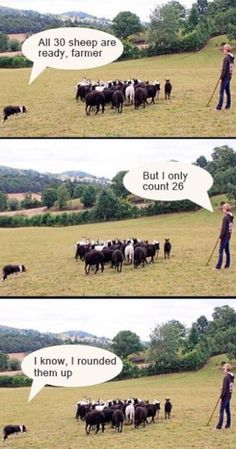 The ultimate farmer pun: 24 Pictures Only People Who Love Puns Will Think Are Funny Math Puns, Math Memes, Science Jokes, Math Humor, Math Quotes, Math Hacks, Biology Humor, Chemistry Jokes, Grammar Humor