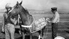 Sergeant Reckless has been honoured with the animal version of the Victoria Cross.