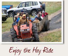 Boone NC Christmas Tree Choose and Cut Farm - Big Ridge Tree Farm ...