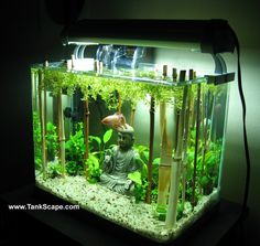 Betta tank with bamboo forest (If only Ben Hornby had lived)