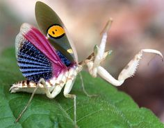 Praying Mantis - Devout, Stealth, Fearsome Hunter