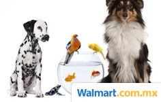 Encuentra juguetes, alimento para perro, alimento para gato, correas, artículos de salud y belleza, areneros, platos y bebederos, casas para perro, acuarios, peceras, nidos y jaulas, camas, y más.