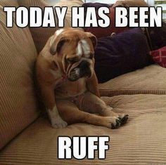 Are you looking for a cute and funny bulldog meme? These 20 cute bulldog memes will surely elicit aww's and make you want to adopt one. Funny Dog Memes, Funny Dogs, Cute Dogs, Funny Animals, Animal Memes, Funny Puppies, Pet Memes, Animals Dog, Adorable Animals