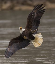 #Eagles