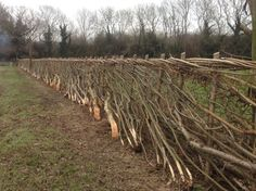 Hedge laying by Michael Short