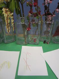 Observational drawings of plants and flowers