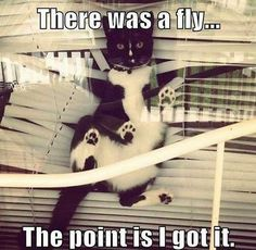 I have literally come home to this exact scenario with my two cats chasing flies in my apartment.