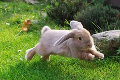 leaping bunny friend. #bunnies