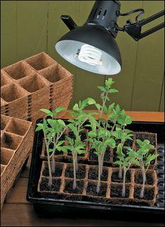 Convert any lamp into a grow light! Full-Spectrum Compact Fluorescent Bulbs.