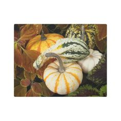 Autumn Squash Photo Metal Print - photography gifts diy custom unique special