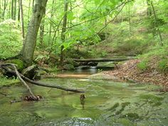 This is somewhere in Kentucky.but it looks like my backyard! Could it be Floyds Fork? Great Places, Places Ive Been, Beautiful Places, Missing Home, Country Walk, Strong Family, My Old Kentucky Home, Amazing Nature, Scenery