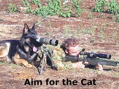 Hit the cat Military Dog Picture of the Week. (April 4th, 2012)