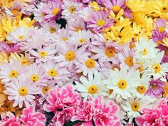 Margaridas - Imagens de Flores  #flores #flowers #imagensdeflores  https://www.facebook.com/ImagensdeFlores