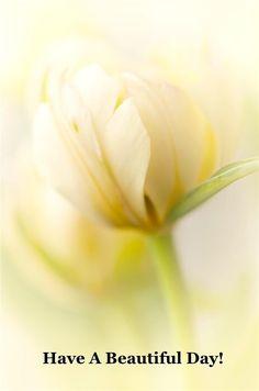 +++ 160803 +++ Wishing you a beautiful day ...♥♥...