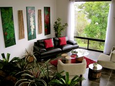 Indoor Plant Decorating Ideas | Indoor Plants