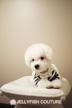Pearl Neckless Lace Shirt  Pet Clothes by JellyfishCouture on Etsy, $39.99 Dog Jewelry, Puppy Clothes, Animal Fashion, Navy Pink, Maltese, Guinea Pigs, Pet Dogs, Pearl, Puppies