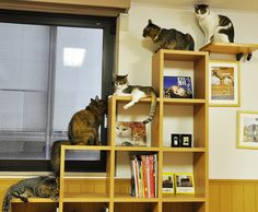 zoo:  棚が猫階段: [チョット] 階段にいる猫が可愛い [ドイテ] - NAVER まとめ