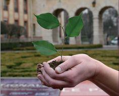 COP21 : La Cité internationale s'engage pour le développement durable