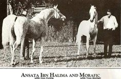 Ansata Ibn Halima and Morafic Beautiful Arabian Horses, Pretty Horses, Horse Farms, Horse Breeds, Horse Stuff, Unicorns, Egyptian, Barn, Polish