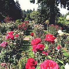 International rose Test Garden -  Portland