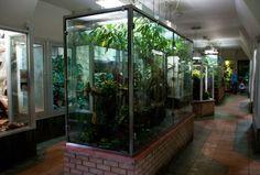 London zoo - oldest - biggest - amazing Reptile House, Reptile Habitat, Reptile Room, Reptile Cage, Reptile Enclosure, Terrariums, Terrarium Reptile, Aquarium Terrarium, Les Reptiles