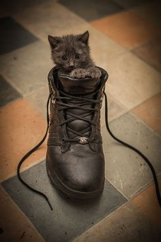 Puss in boots #zappos #kitty