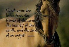 God made the horses from the breath of the wind, the beauty of the earth, and the soul of an angel.