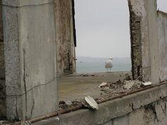 Gull on rubble, alcatraz, san francisco