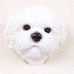 Shih Tzu White Sport Cut Doogie Head