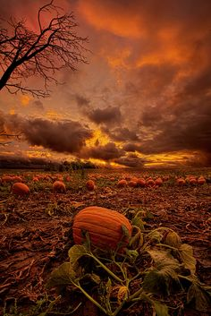 Waiting For The Great Pumpkin by Phil Koch on 500px