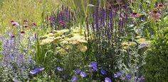 Zomerborder in geel en violet Geranium Rozanne, Buxus, Colorful Garden, Geraniums, Garden Plants, Flowers, Beautiful, Gardening, Floral