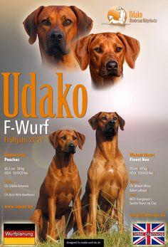 www.UDAKO.de